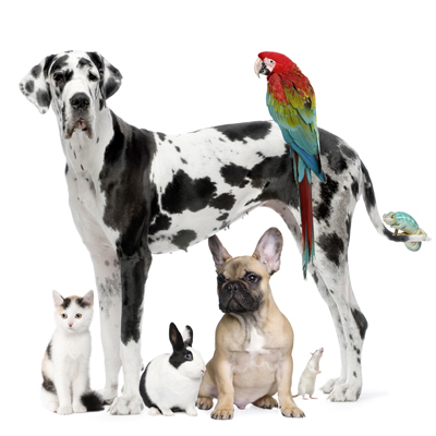 Country Lane Animal Hospital - Veterinary Services